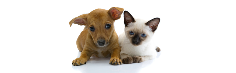 Steam-A-Way Can Help With Damage Caused by Pet Urine